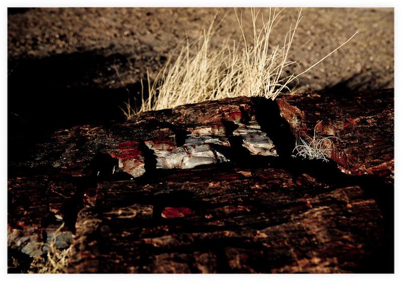 Petrified Forest Arizona Decibel Dragon